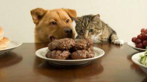 Livro aborda nutrição e a alimentação de cães e gatos